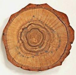 Дерево для талисмана