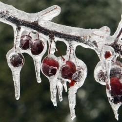 Лед и холод остуды