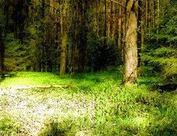 Полянка в лесу - место для приворота